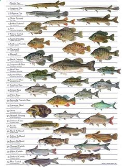 images  fish  pinterest trout fishing