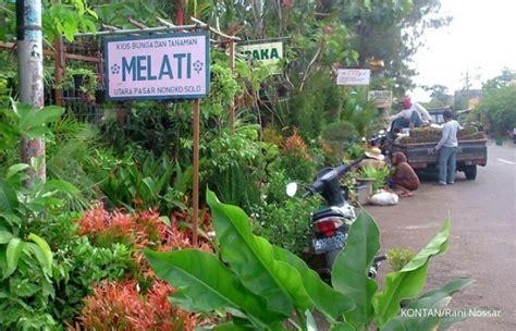 pasokan tanaman hias  berbagai daerah
