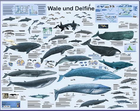 wal poster tiere poster gro 223 e auswahl im kinderpostershop