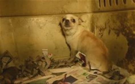 puppy mills in ga the wire the student news site of forsyth high school