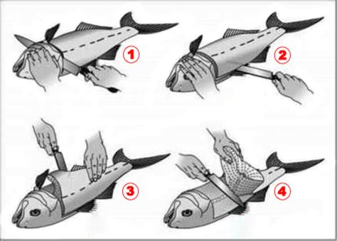 falay knife how to fillet a fish