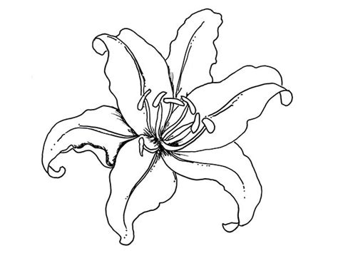 coloring pictures of lily flowers flowers lily flower coloring page flowers pinterest
