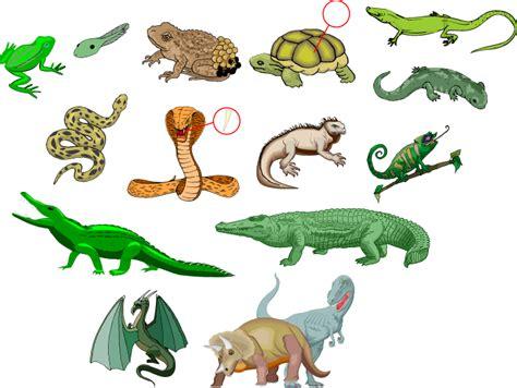 libro fg h reptils britain smowtion