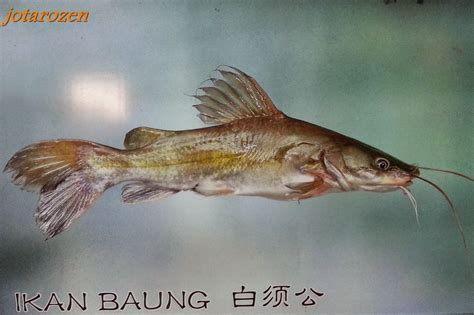 Pc 09 Mainan Pancing Ikan footsteps jotaro s travels tapah fish new