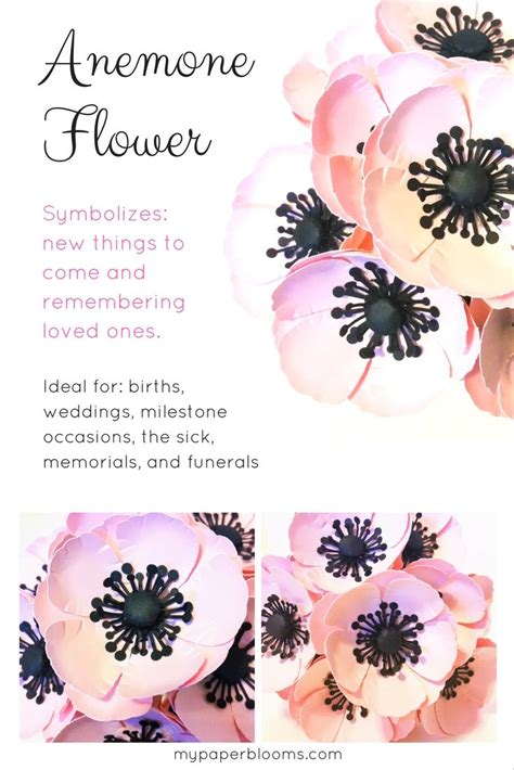 anemone flower meaning anemone flowers the language of flowers flowers