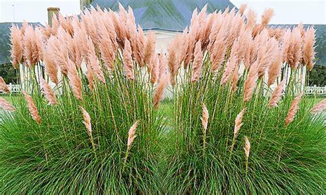 garten pflanzen versand pasgras pflanzen groupon goods