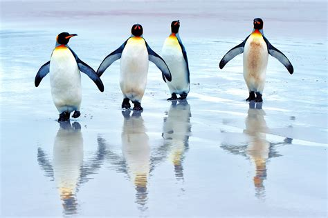 Penguin Wallpapers HD Pictures   One HD Wallpaper Pictures