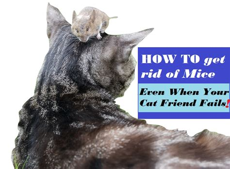 how to get rid of mice in kitchen cabinets get rid of mice and other kitchen pests 5 easy tips