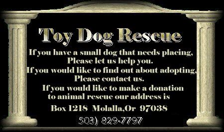 shih tzu rescue bay area shih tzu rescue bay area california image breeds picture