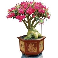 Pupuk Untuk Bunga Pot jual pot bunga dan tanaman surabaya beli distributor