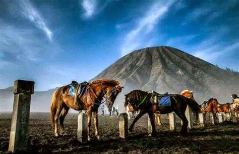 Cheap Bromo tour package from Yogyakarta to Surabaya or