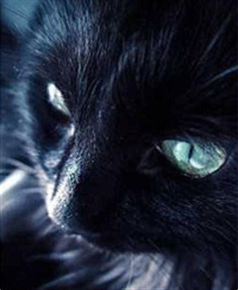 uccidere un gatto porta il calderone magico bast bastet la dea felina