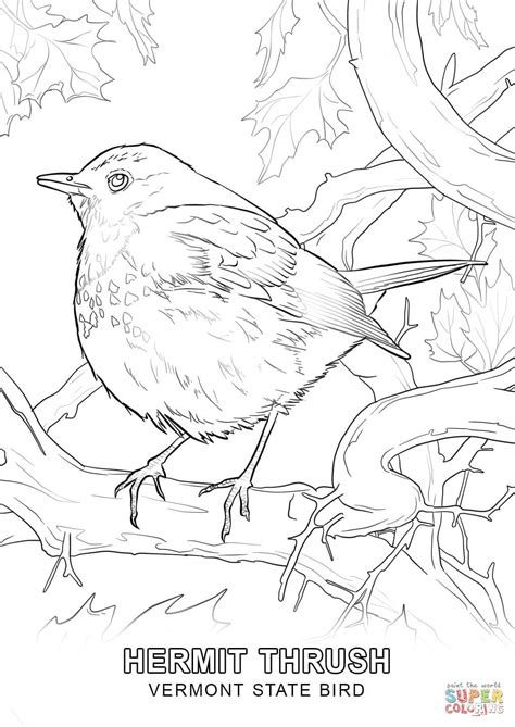 vermont state bird coloring page free printable coloring