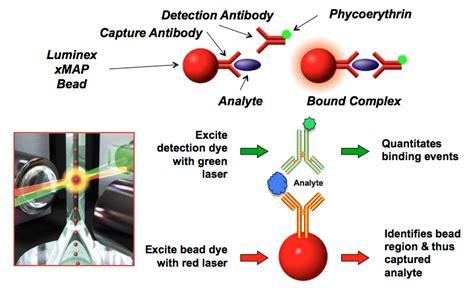 luminex bead based immunoassays drive immunoassays