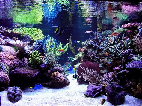 reef aquascaping designs google search saltwater