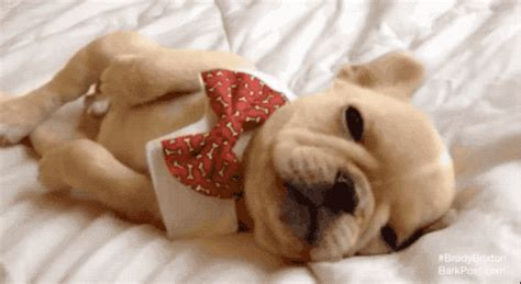 why do puppies sleep so much why do dogs sleep so much barkpost