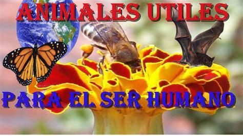 imagenes de animales utiles animales 218 tiles para el ser humano youtube