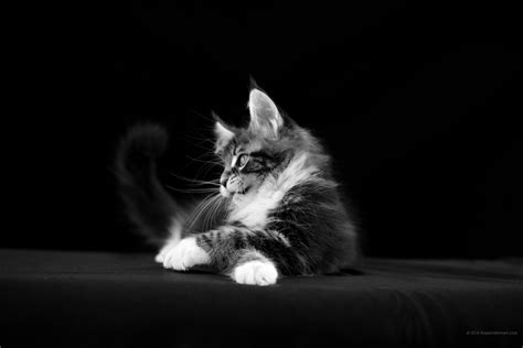 cat wallpaper tablet 2160x1440 cat wallpaper photo backgrounds free 7387855