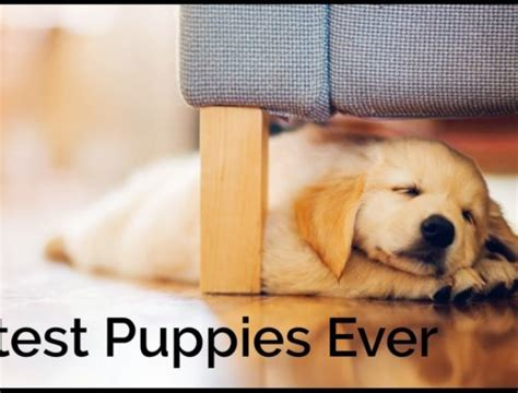 rot the cutest in the world books cutest puppies book archives puppies