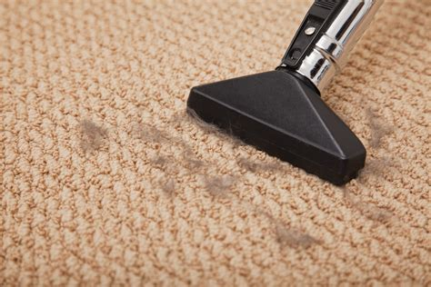 how to vacuum carpet can vacuum cleaners damage carpets