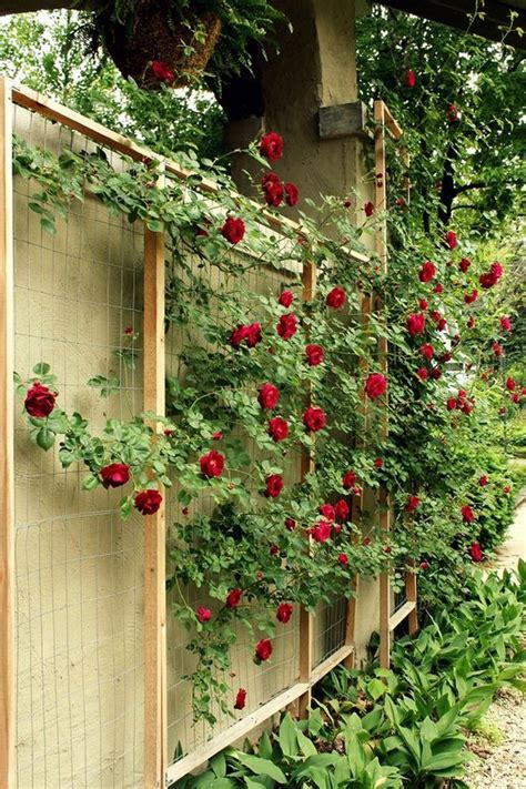 ideas for climbing rose supports 15 creative and easy diy trellis ideas for your garden the in