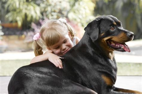 seizures in rottweilers are rottweilers with canna pet 174
