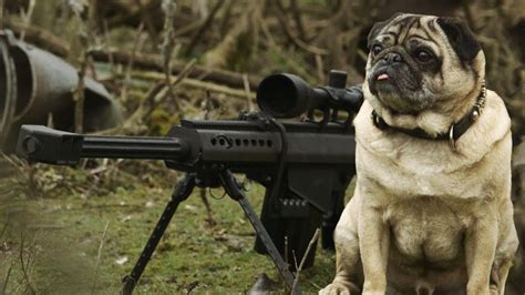 how do pugs stay pugs at work sergeant pugsley saves the day mighty pugs