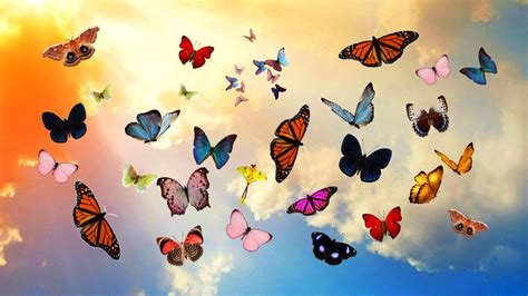 Interior Wallpapers For Home by Colorful Butterflies Most Beautiful Wallpapers New Hd