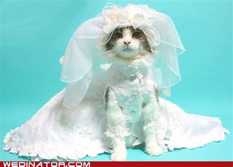 Cat wedding dress (short train)   Kitties of all sorts and
