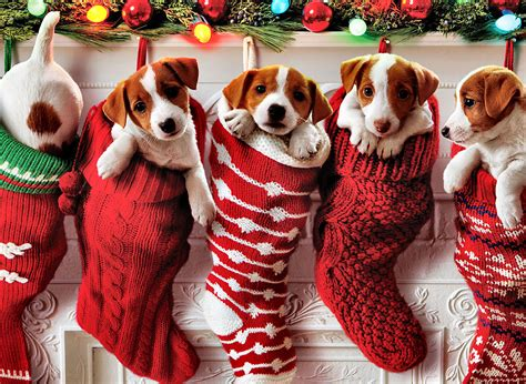 christmas puppies wallpapers big and small dog breeds