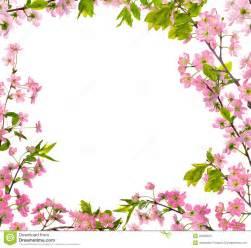 frame isolado do cherry tree flores cor de rosa foto de