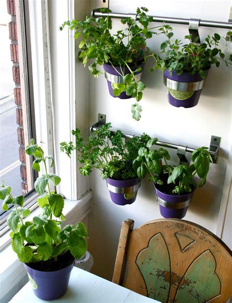 kitchen herbs  grow homesfeed