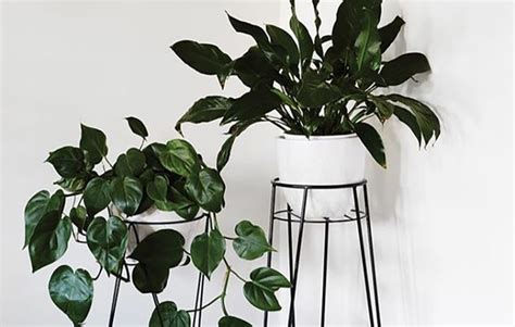 these 5 indoor plants also come with health benefits a