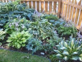 hostas on pinterest hosta gardens shade garden and