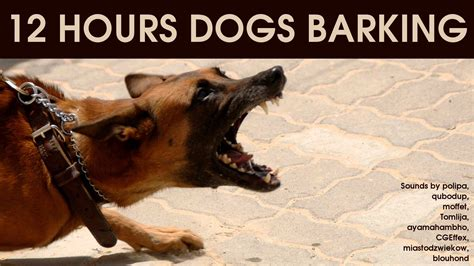 dogs barking sounds dogs barking for 12 hours sound effect