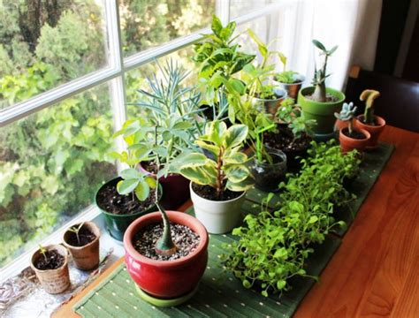 plants for home vastu plants for your house the royale