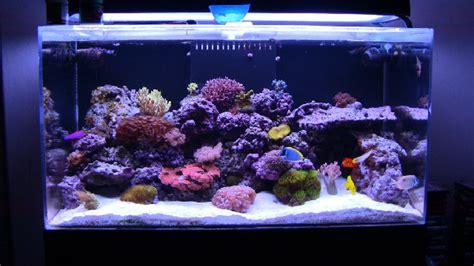Types of Saltwater Aquariums   Mad Hatter's Reef