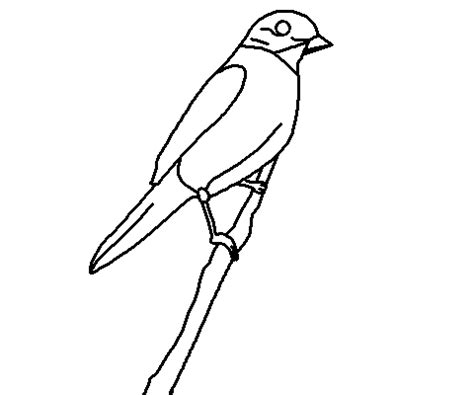 eastern bluebird coloring page coloring books by connected lines