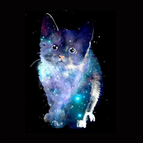 wallpaper galaxy cat 56 best gatos en el espacio images on pinterest space