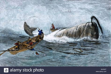 whaling longboat whalers in longboats lancing a whale with harpoons 1800s