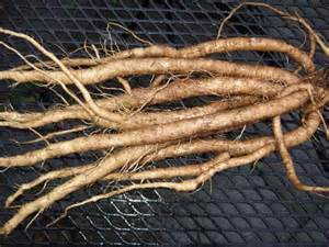 Deep Rooted Vegetables - gobo a common weed or gourmet vegetable veggie gardening tips