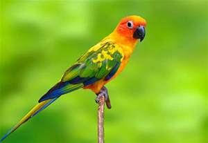 top 10 exotic birds