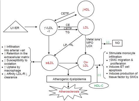pattern b type ldl atherogenic dyslipidemia manjunath c n rawal jr irani pm