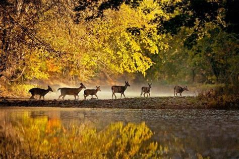 deer enjoying  autumn day pictures   images