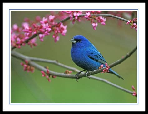 23 best images about birds i ve seen in arkansas on
