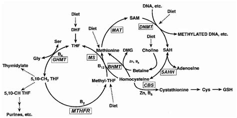 Liver Detox And Methylation by Cancer Causes Prevention