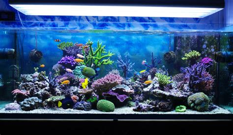 home aquarium myths about keeping an aquarium at home