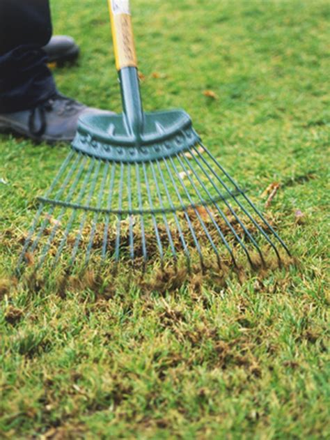 Landscape Rake Sod When To Start Lawn Raking Growing Together With