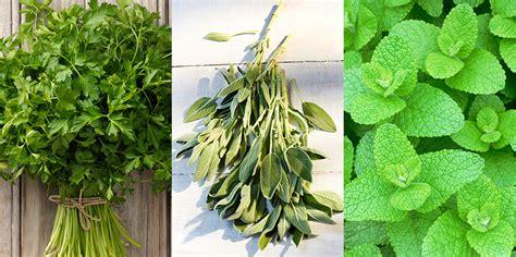 herbs  grow   garden  herb