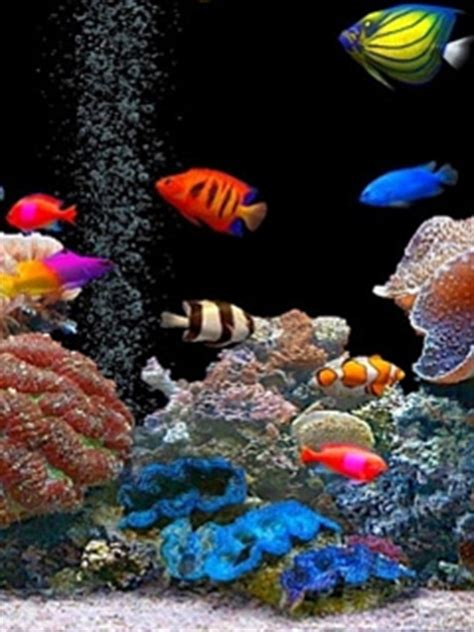 wallpaper colorful fish and interactive water download colorful fishes mobile wallpaper mobile toones